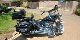 Softail Classic priced to sell