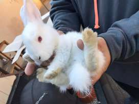 Beautiful rabbits available