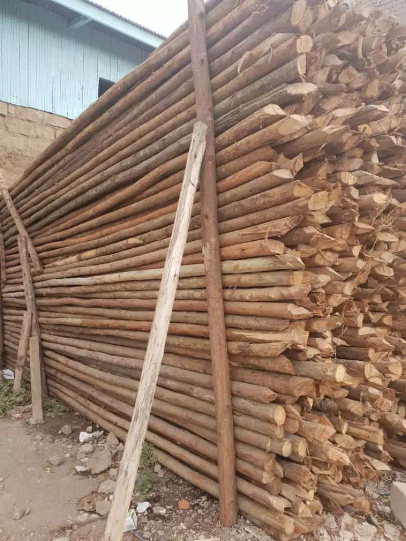 All type of timber products 0