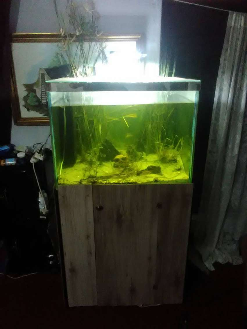 Fish tank for sale 0