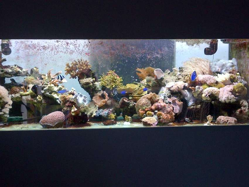 coral for sale 0