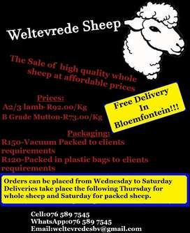 Sheep meat at affordable prices