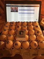 Инкубационные яйца яичных кур Хайсекс Вайт і Браун