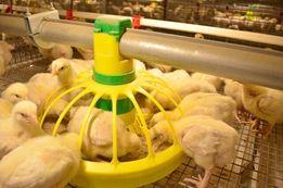 Продам цыплят бройлер, индюк и другая сельхоз птица
