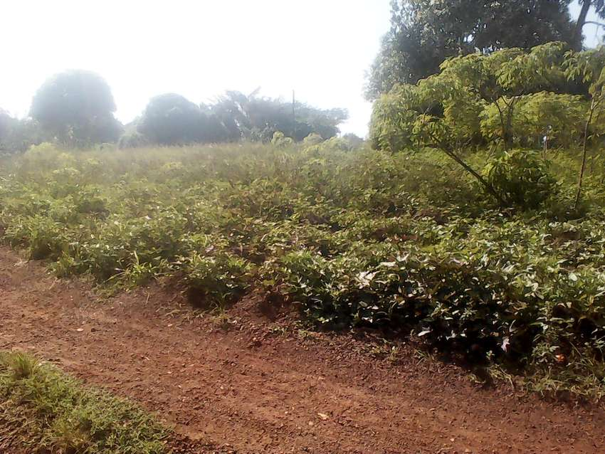 20 titled acres in Bulera Mityana at 4.5M each negotiable 0