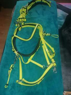 Horse bridle, breastplate and martingale