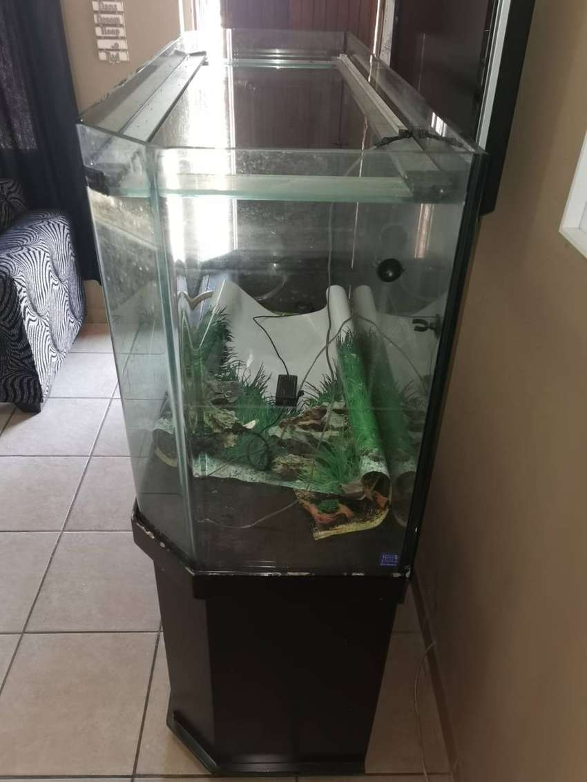 5ft double curved fish tank 0