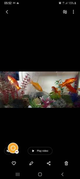 Complete Fish tank with 2 gold fish