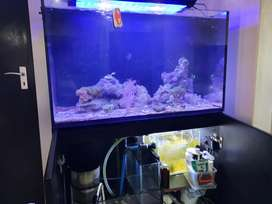 REDUCED TO GO: Redsea Reefer 250 Marine Fish Tank