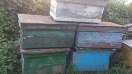 Продам вулики для бджіл