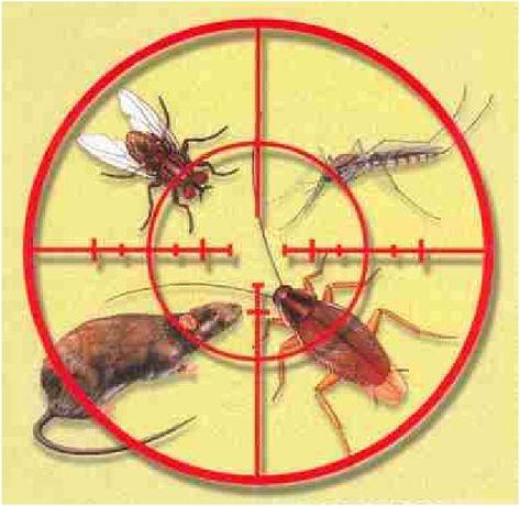 Уничтожение тараканов,постельных клопов,клещей,кротов,крыс,мышей т.д. Киев - изображение 1