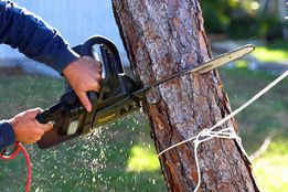 Спил и удаление деревьев, обрезка и валка