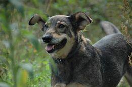 Dusia- miła sunia czeka na adopcję