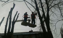 Обрезка деревьев крупномеры