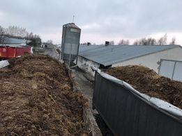 Obornik kurzy z ciętą słomą 27-28 ton auto z dostawa
