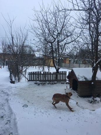 ОЧЕНЬ СРОЧНО!! Продам дом Вашковцы - изображение 17