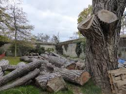 Спиловка, валка деревьев,обрезка веток .Порезка дров