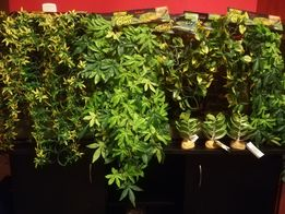 TERRARIUM rośliny Exoterra nowe terarium
