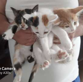 4x kittens available
