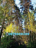 Шикарный участок в Кировском в начале! Лес в 50 метрах