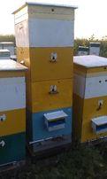 продаю корпуса РУТ и улья для пчел корпусные Рут и Дадан