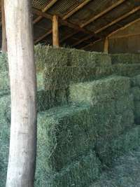 Image of Prime Race Horse Quality Lucerne Hay