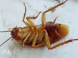 травим тараканов