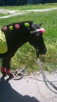 заказ пони на праздник.