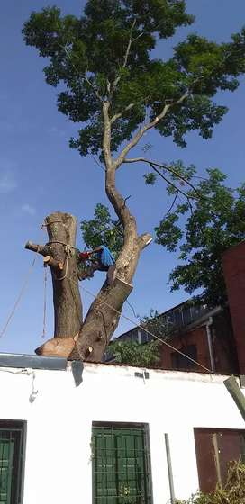 TREE FELLING AND REMOVALS BUSH