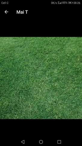 ALL TYPES OF INSTANT LAWN