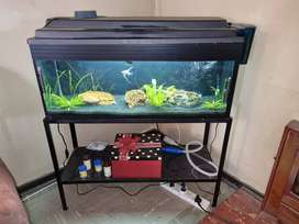 Fish tank , fish and accessories