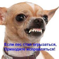Зоопсихолог, кинолог-дрессировка собак, коррекция поведения. On-line.