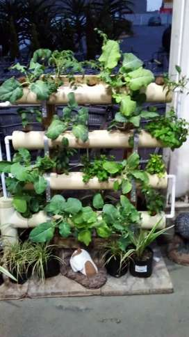 A Frame Garden Systems for indoors or outdoors .