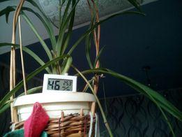 Термометр и гигрометр измеритель влажности