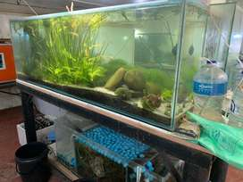 Fish tanks / Aquariums