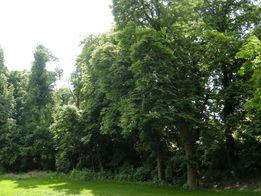 inwentaryzacja drzew, inwentaryzacje zieleni, ekspertyzy