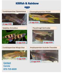 fish eggs and cultures