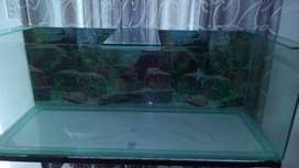 Fish tank...1225x490x490.. with canopy n perks