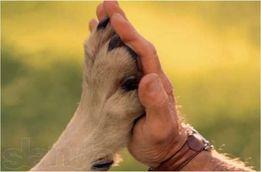 Ветеринарная помощь Вызов ветеринара на дом Днепр