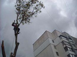 Спилим дерево в Днепре