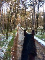 Конные прогулки, занятия на лошадях, верховая езда