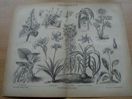 1878 r. DRZEWA, LIŚCIE, ROŚLINY oryginalne XIX w. grafiki do wystroju