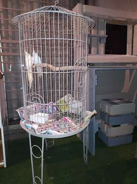 Bird cage with two cockatiels