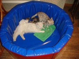 Кошкин дом (для кошачьей семьи манеж)-6635р.