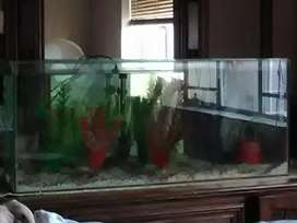 800L fishtank with plants, pump, filter with fish