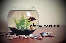 Аквариум с рыбкой - Оригинальный Подарок