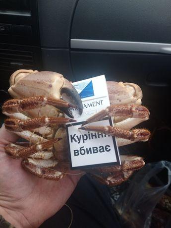 КРАБ КРАБ.Вкусно варим под заказ.!24/7 Круглосуточно Одесса - изображение 5