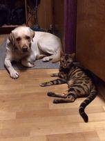 Передержка собак, кошек