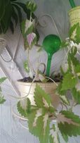 Аква-колба-шар капельного полива комнатных цветов.Увлажнитель грунта