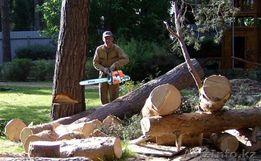 Спилю деревья за дрова, пилю деревья за дрова.
